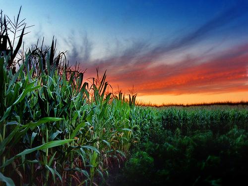fsa-crop-reporting